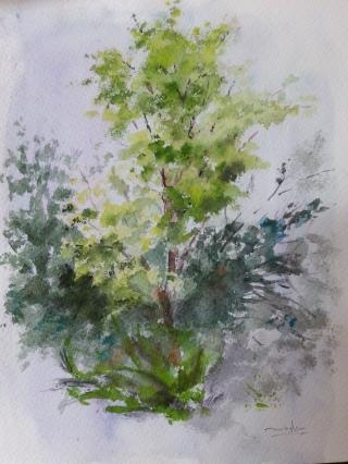 Autor: María Luisa García. Medidas: 30 x 21 cm Técnica: Acuarela